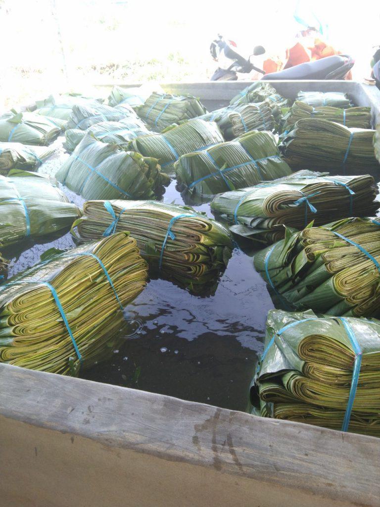 Soaking-fresh-banana-leaves-in-ozone-system