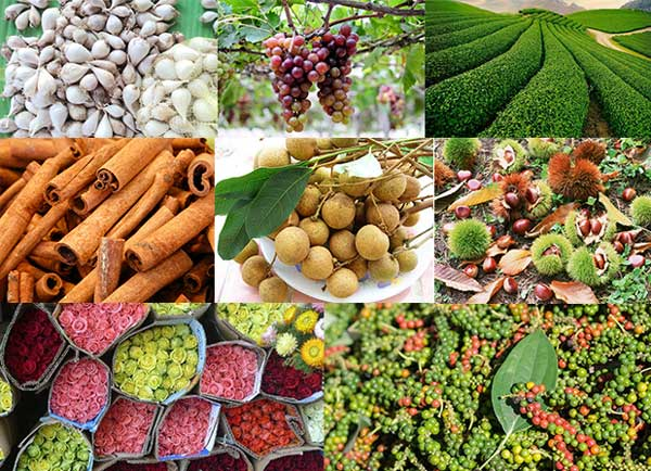 The Ministry of Viet Nam Agriculture and Rural Development removes barriers to exports